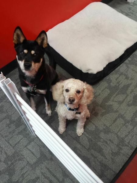 Kona and Buddy